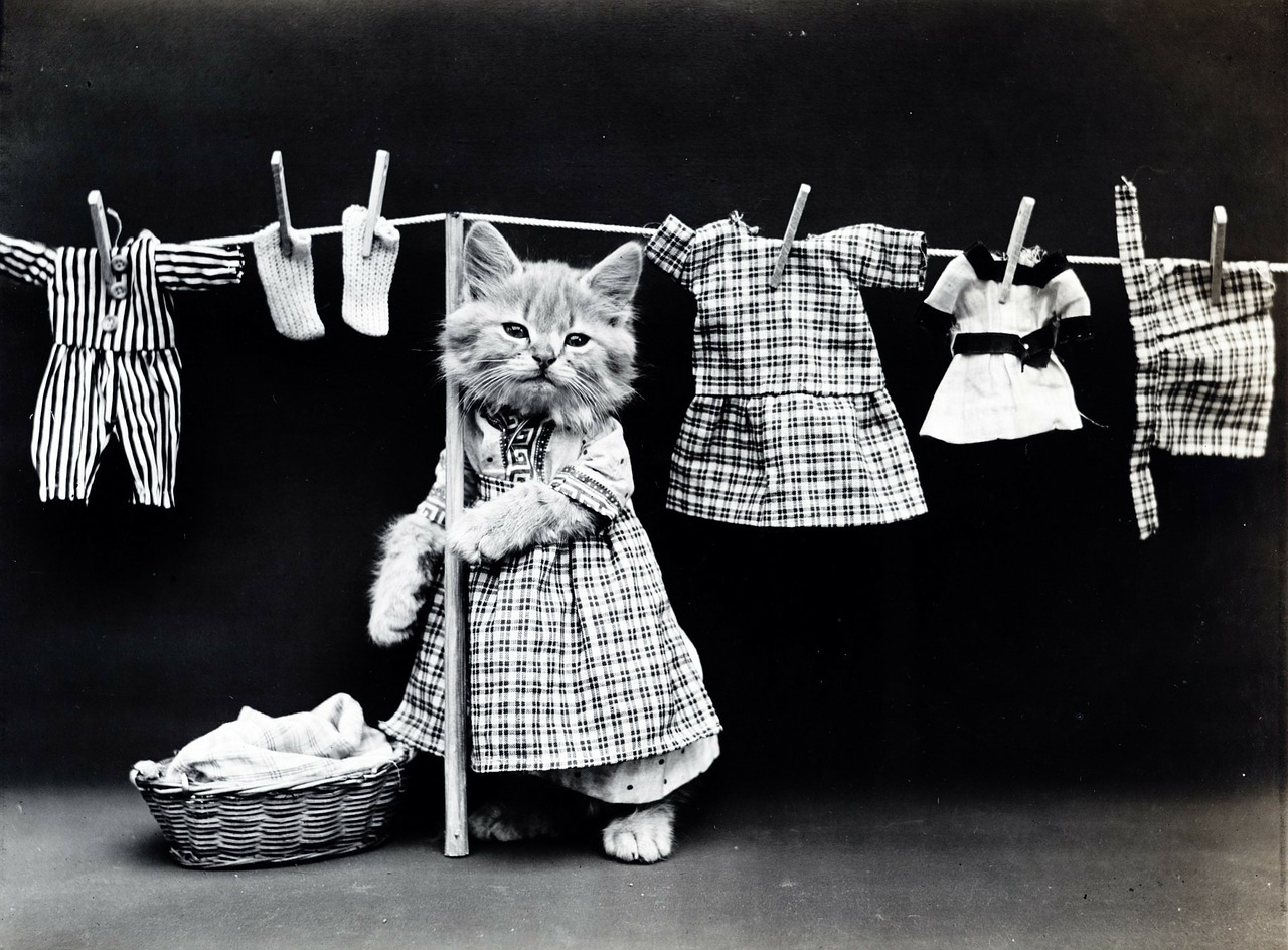ワーホリ&留学生必読!ドイツの洗濯機と乾燥機の使い方